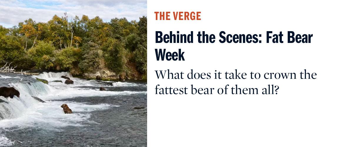 Behind the Scenes: Fat Bear Week   The Verge